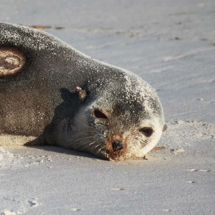 Save the Seal?